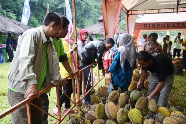 festival-durian-lolong-2016-6